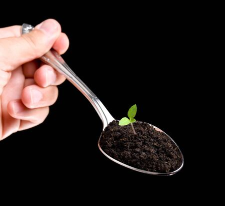 Organic farming is metaphorically represented by the spoon full of soil and young plant. Stock Photo
