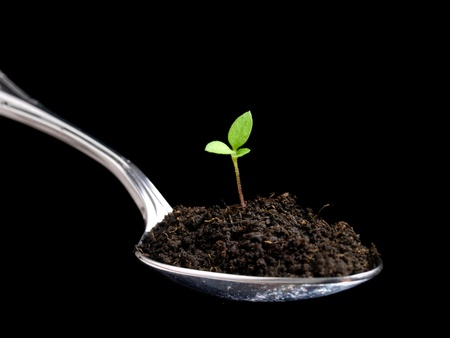 humus: Metaphoric view of organic food presented with a spoon full of humus and young plant. Stock Photo