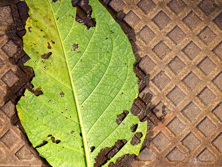 Green leaf on a rusty metal surface as a metaphor about ecology problems... Stock Photo - 10627388