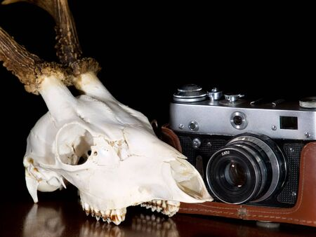 Old photo camera and wild animal skull... photo