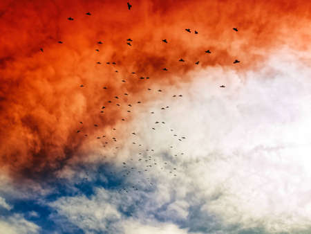 bevy: Flock of crows on the sky that becomes red as an allusion of apocalypse