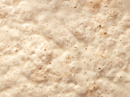 ferment: Macro view of the yeast surface usable for food themes and backgrounds.