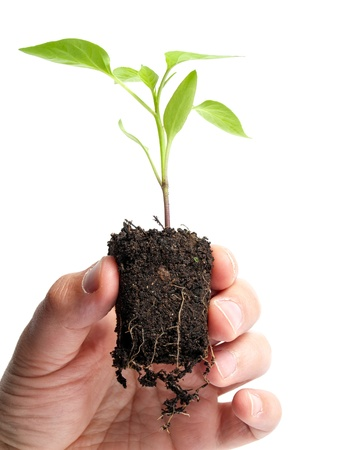 Man is holding young plant that grows in a lump of soil, isolated on a white background