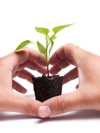 siembra: Dos manos son la protección de la planta joven que crece a partir de una masa de suelo Foto de archivo
