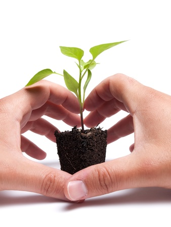 Two hands are protecting young plant that grows from a lump of soil photo