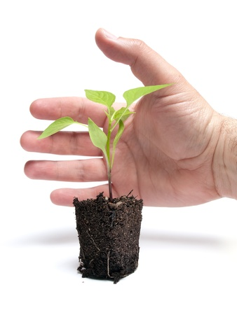 Man is trying to protect a young plant with his hand  photo