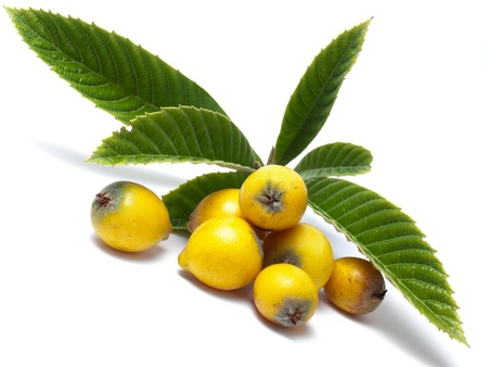 rosaceae: Loquat, Eriobotrya Japonica, is a fruit tree in the family Rosaceae, Stock Photo