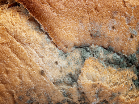 unsanitary: Closeup view of rotting processes on a moldy bread. Stock Photo