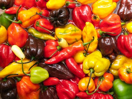 Closeup view of several species of hottest chili peppers.