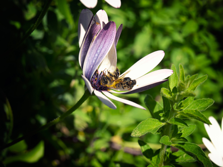 Two dead bees on the flower as the concept of the problem of extinction of bees