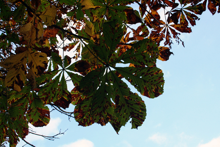 Autumnal Leaves with Blue Sky Background