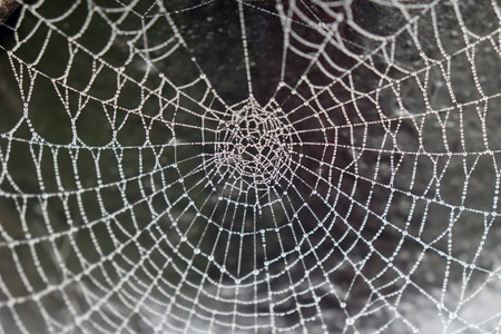 Closeup of Spiderweb Covered with Water Droplets
