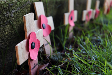 Remembrance Day - Row of Wooden Crosses with Poppies