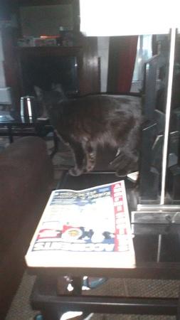 black: black cat Stock Photo