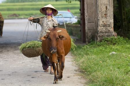 Duong Lam Village, Vietnam-3 september 2010: Een Vietnamese boer loopt haar waterbuffel op 3 september 2010 in Duong Lam Village, Vietnam.