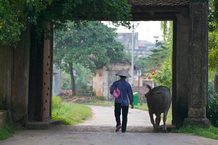 DUONG LAM, VIETNAM - 3 SEPT: Vietnamese landbouwer wandelingen haar water buffalo op 3 September 2010 in Duong Lam dorp, Vietnam.