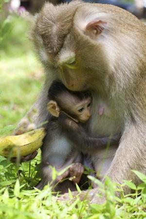 Aap met baby Moeder in de Wild Stockfoto
