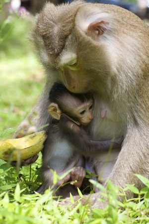 b�b� singe: Singe de b�b� avec la m�re dans sauvage Banque d'images