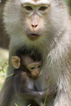 b�b� singe: Baby Monkey avec la m�re dans Wild