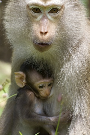 Baby Monkey with Mother in Wild photo