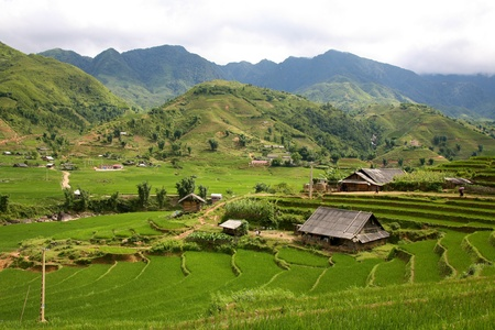 Traditional terraced rice field in Sapa, Vietnam Editorial