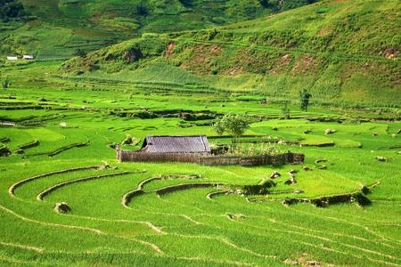 Traditionele terrasvormige rijstvelden in Sapa, Vietnam