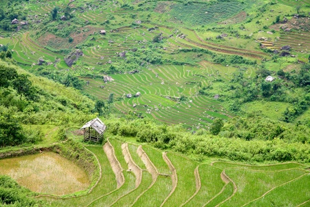 Traditional terraced rice field in Sapa, Vietnam Stock Photo