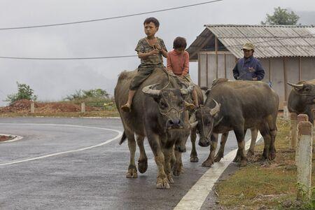 ha: BAC HA, VIETNAM - NOVEMBER 21: Unidentified Vietnamese children riding water buffalo on road November 21, 2010 in Bac Ha, Vietnam.