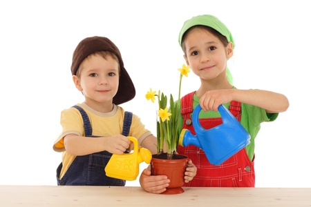 Little children caring for potted narcissus, isolated on white Stock Photo - 9429650