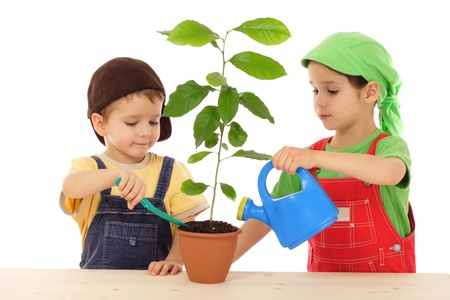 Little children caring for plant, isolated on white photo