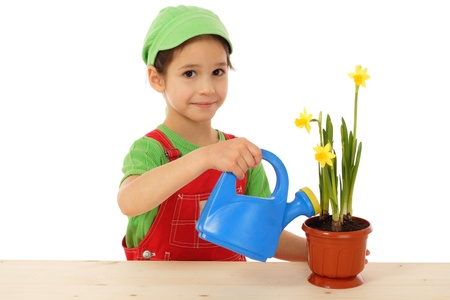 Little girl watering the daffodil, isolated on white photo