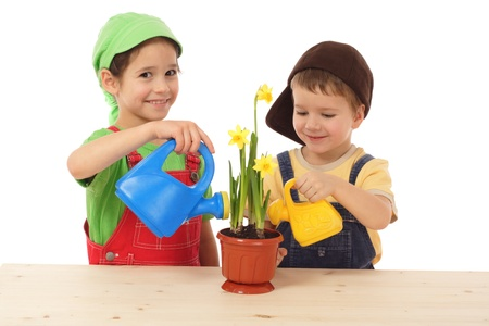 Little children caring for potted narcissus, isolated on white photo