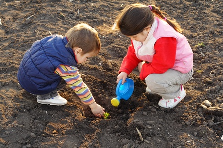plowed field: Little children on field seeding the plant