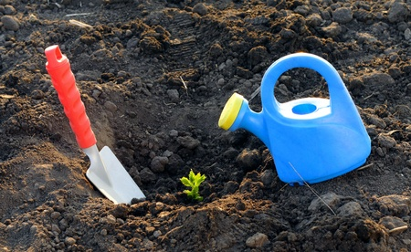 Watering can and garden shovel on soil with plant photo