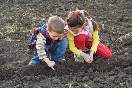 farm boys: Two little children planting seeds in the field, outdoors