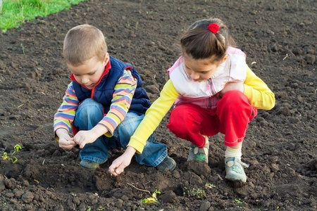 seeding: Two little children planting seeds in the field, outdoors