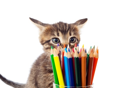 sniffing: Tabby kitten sniffing color pencils in glass, isolated on white Stock Photo