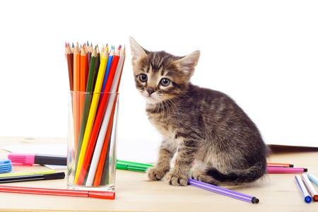animal pussy: Tabby kitten sitting on table with color pencils, isolated on white