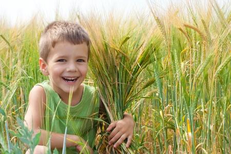 spica: Ni�o peque�o en un campo de trigo con la adopci�n de una espiga