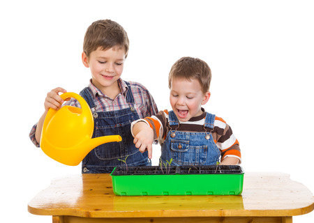Two kids watering a seedling on the desk, isolated on white photo