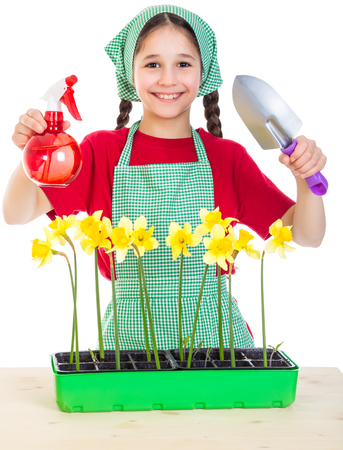 Girl care daffodils on the desk, isolated on white photo