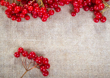 guelder: Colorful red viburnum berries on linen background