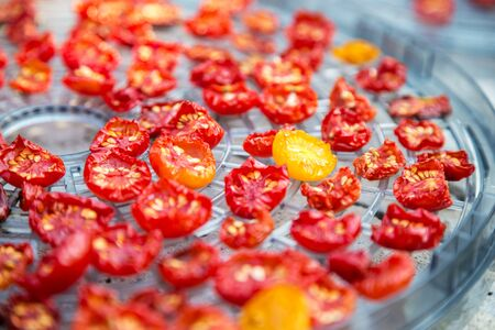 sundried: sundried red and yellow cherry tomatoes on dehydrator tray