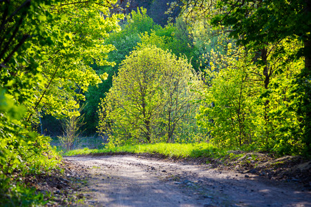 nature natural: Spring road in the forest, fresh green leafs on sunlight