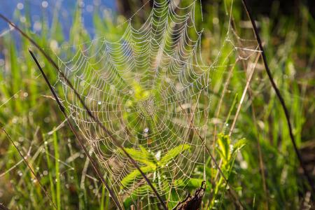 Shiny dew on spiderweb, summer morning concept photo