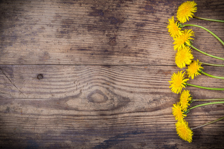 Arrangement of dandelions on brown wood texture with empty space for text