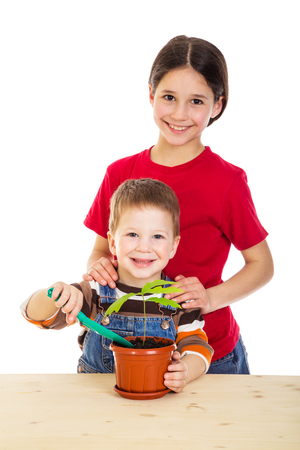caring for: Two smiling kids caring for potted oak seedling, isolated on white Stock Photo