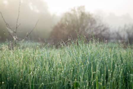 mist: Morning dew on fresh spring grass on the meadow, natural background Stock Photo
