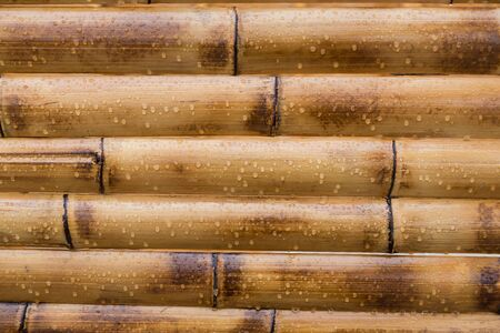 water plants: wet yellow bamboo background with water drops Stock Photo