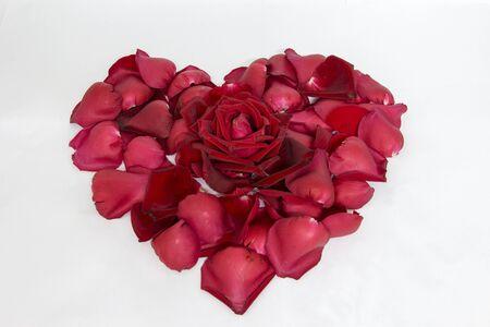 valentine s day: Rose for valentine s day on white background